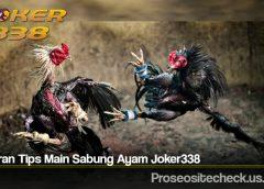 Bocoran Tips Main Sabung Ayam Joker338