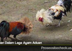 Tahapan Dalam Laga Ayam Aduan